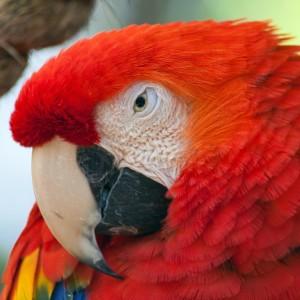 Macaw square